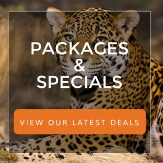 promo-packages2